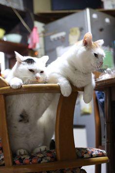 みみのおなか - かご猫 Blog