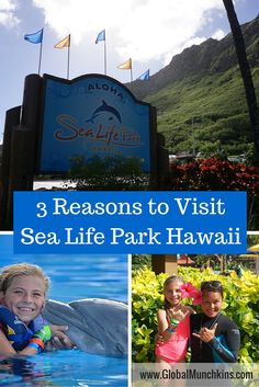 Looking for top things to do in Oahu with kids? Check out our 3 reasons to visit Sea Life Park Hawaii on www.GlobalMunchkins.com .   .   . #ThingsToDoinOahu #swimwithdolphins #SeaLifeParkHawaii