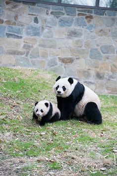 Bao Bao's Second Day Outside April, 2, 2014 | Flickr - Photo Sharing!