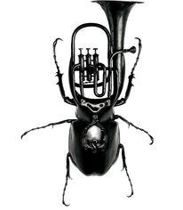 Exotic Bug Instruments Redefine Design Norms - My Modern Metropolis