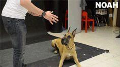 Un perro que no tolerará ninguna de estas tonterías: | 25 GIFs de animales que enternecerán tu frío y muerto corazón