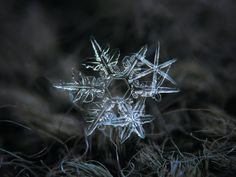 "Kljatov was inspired to try his own snowflake photography after seeing a website called ""Snow Crystals"" created by a CalTech physics professor named Kenneth Libbrecht."