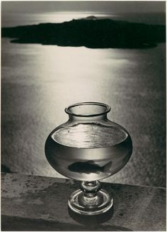 Goldfishbowl - Herbert List