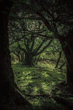Druids Trees: #Forest #grove.