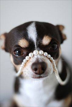 All girls need their Pearls....