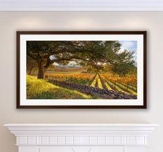 Vineyard Print, Panorama Oak Tree, Large Napa Valley Photo, Autumn Home Decor, California Wine Country, Harvest Art, Green Gold, Oakville by SusanTaylorPhoto on Etsy