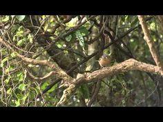 bird on branch - YouTube