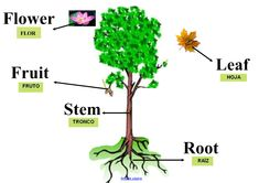 Leaves, Fruit, A4, Flowers, Google, Plant Parts, Parts Of The Mass, Plants, Princesses