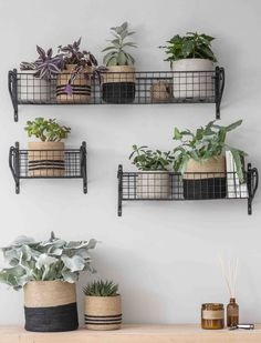 Home Interior Contemporary Garden Trading - Steel Basket Shelves - Large.Home Interior Contemporary Garden Trading - Steel Basket Shelves - Large Basket Shelves, Baskets On Wall, Storage Baskets, Wire Basket Decor, Wall Basket, Gift Baskets, Cosy Home, Large Baskets, Diy Décoration