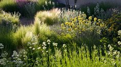 Garden in a housing community El Montecillo, Madrid Mediterranean Garden, Plantar, Ornamental Grasses, Madrid, Garden Inspiration, Garden Landscaping, Perennials, Community, Nature