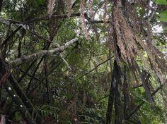 Uluguru forest