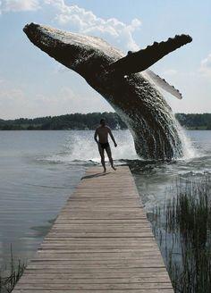 Whale backflip