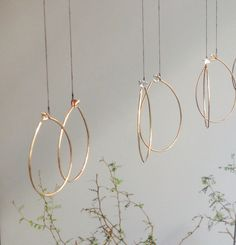 Gold Thorn hoops