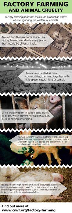 animal_cruelty_infographic_700