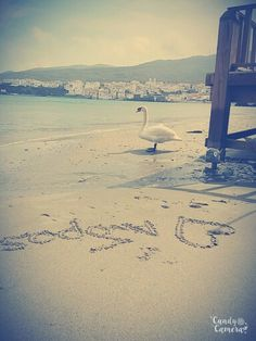 Love Andros❤❤❤