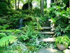 Shade Landscaping Ideas Best Of Lanaping Ideas For Shady Shade ...