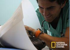 """Sebastián Jiménez  es veterinario especializado en animales exóticos y fauna zoológica, en """"Doctor Vet"""". #NatGeo #LoViEnNatGeo Mira contenido exclusivo en http://www.foxplay.com/natgeo"""