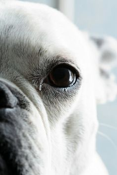 Boxer Close up