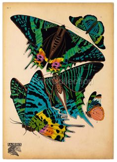 E.A. Seguy was an artist, designer and etymologist Seguy was very prolific in the early part of the last century in France. This is part of a larger set of about 14 groups of butterflies. Butterflies