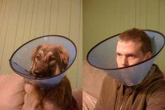like dog