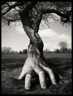 surrealism I think the tree trunk to the hand needs to have a slower change. Like the hand needs to have a little more tree like detail near the wrist but I still think this is amazing Louise Bourgeois, Surrealism Photography, Fine Art Photography, Conceptual Photography, Photoshop, Bizarre, Surreal Art, Photomontage, Photo Manipulation