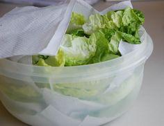 conservando alface na geladeira