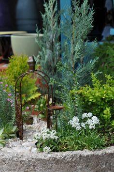 Container Fairy Gardens - I apologize for the broken link. picture pinned for inspiration. Mini Fairy Garden, Gnome Garden, Fairy Gardens, Fairies Garden, Garden Shop, Garden Bed, Miniature Plants, Miniature Gardens, Garden Terrarium