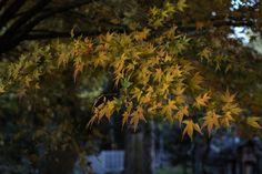 黄葉 | Flickr - Photo Sharing!