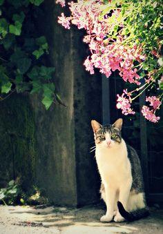 Cat(ᵔᴥᵔ)