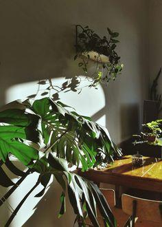 Domowa dżungla House jungle Polish jungle (8)