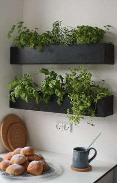 Black and basic wall boxes are an ideal option for growing herbs indoors within easy reach of your kitchen and preparation surface. Grow your own herbs all year long in a well-lit area saving you money at the market and keeping your space green and happy! Kitchen Herbs, Herb Garden In Kitchen, Diy Herb Garden, Home And Garden, Green Garden, Wall Herb Garden Indoor, Herbs Garden, Plants In Kitchen, Kitchen Decor