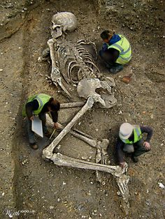 Nephilim Skeletons Smithsonian Giant worth100... nephilim