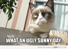 What an ugly sunny day-Every time I see Tard I can't stop laughing, He is all I want for Christmas!
