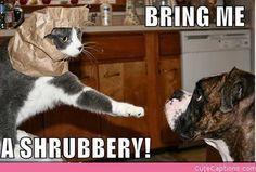 """""""funny cat""""   funny cat lol"""