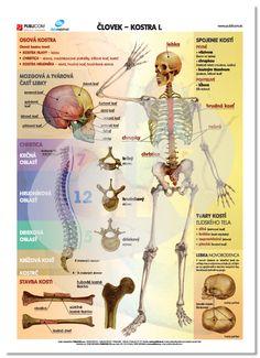 Človek - Kostra I. Educational Technology, Science And Technology, Elementary Science, Human Body, Preschool, Classroom, Historia, Anatomy, Autism