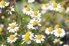 Little bee on flower by Santi Punya