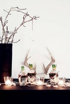 Antlers + star light strands + clear tea light holders + succulents/plant bulbs! Getting inspired for a super cool & rustic backyard summer party theme!!