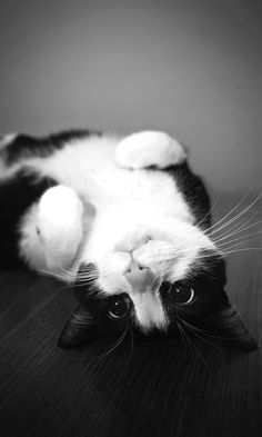 This cat reminds me of our Moo.. Rip our little Moo moo