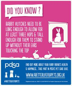 Bunny Rescue Bristol
