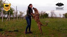 Novice Trick Dog - Kisses - with Cimarron Uruguayo from Cerberus Illusio...