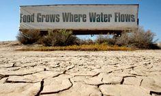 california2 La comida crece donde hay agua. California suministra el casi el 100% de las zanahorias, aguacates, fresas, uvas y almendras consumidas en Estados Unidos y también es uno de los mayores productores de ganado. Sin embargo, sus suelos se están secando, la producción de 2014 ha sido calificada como pobre y el precio de los alimentos ha subido.