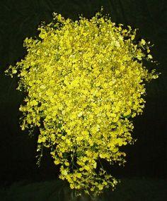 mini bouquet chuva de ouro - Pesquisa Google