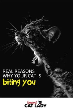 Ever wonder why your cat bites you when you try to pet him or sometimes for no reason? Here is the real reason why your cat keeps biting you. Cat Care Tips, Pet Care, Pet Tips, Kitten Biting, Cat Attack, Cat Hacks, Outdoor Cats, Cat Behavior, Cat Breeds