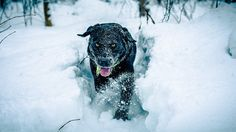 If the weather is appropriate (not bitterly cold, not very wet), get the dog outside, even if for a short while. Even if it's cold for you, it is important for your dog to get some physical activity, even in the winter.  http://www.dogs-and-dog-advice.com/when-is-it-too-cold-to-walk-your-dog/ - Dogs and Dog Advice