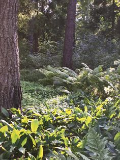 Healing, Garden, Plants, Garten, Lawn And Garden, Gardens, Plant, Gardening, Outdoor