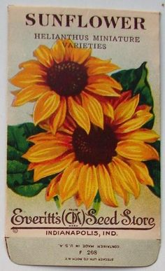 pictures of vintage seed packets | EVERITT'S SEED STORE, Sunflower F208, Vintage Seed Packet (SP1764)