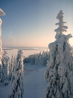 Koli National Park, Finland is soo pretty Winter Magic, Winter Snow, Winter Time, Beautiful World, Beautiful Places, Beautiful Pictures, Winter Instagram, Instagram Ideas, Lappland