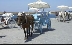 The horse that takes you to a tour all aroundthe old port