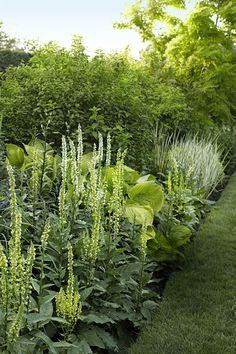 9 Privacy Landscaping Ideas — Garden Screening Ideas