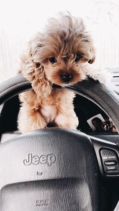 Dog And Puppies Small .Dog And Puppies Small Super Cute Puppies, Baby Animals Super Cute, Cute Baby Dogs, Cute Little Puppies, Cute Dogs And Puppies, Cute Little Animals, Cute Funny Animals, Puppies Puppies, Adorable Puppies